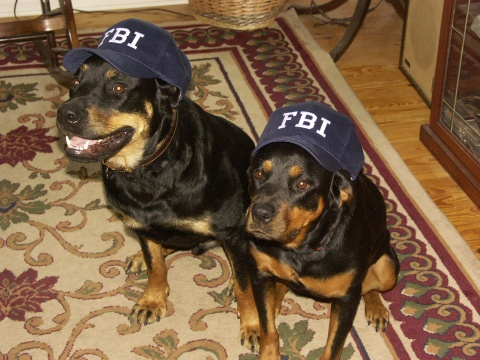 Max and Maggie in their FBI caps.  Max loved it, but Maggie...not so much!