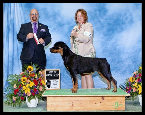 Best of Opposite - Chain O' Lakes Show 1/26/14.  Just one more pt for a GCH!