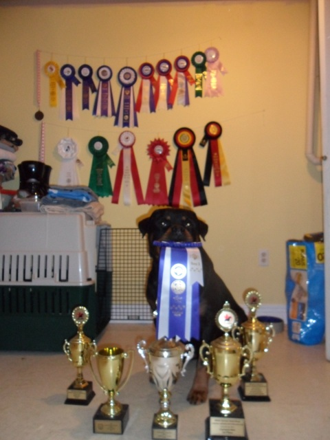 Misha knows he earned these ribbons and trophies!