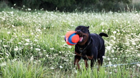 august-jaimie-and-ball2